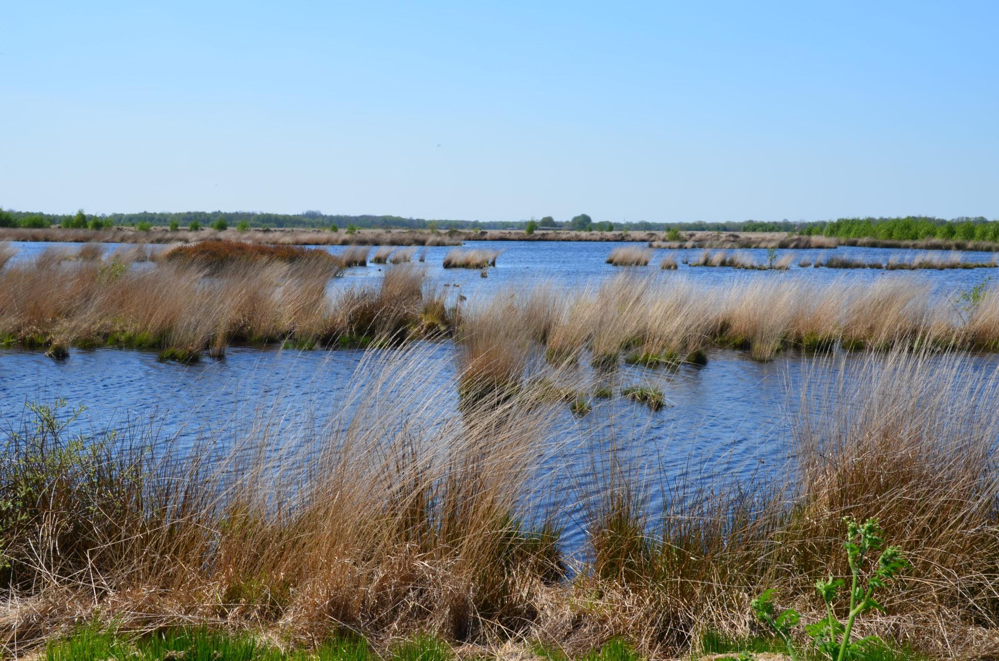 Jannie Guichelaar landschap